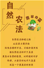 网友都在问!博兴的翡翠白菜是咋回事,自然农法很多人竟然还不知道...