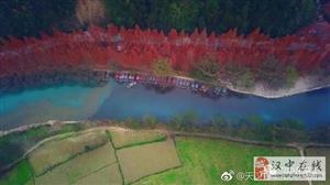 勉县千棵水杉红了  斑斓色彩染透初冬