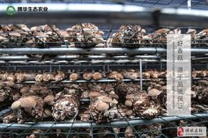 """蓝瘦""""香菇"""",论一枚香菇的自我修养..."""