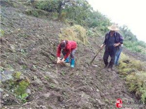神河镇柳林村77岁退伍军人老党员包学乾带头发展特色产业纪实