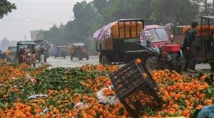 2毛5一斤仍滞销!广西蜜桔堆积国道边成垃圾,谁能帮帮果农?