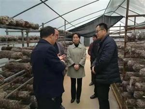 香菇绽放富民果,产业脱贫助振兴 ――新池镇牛庄的致富故事