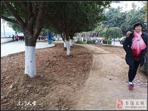【苍溪】滨江路绿化升级改造【图】