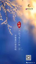 【绿洲·望嵩文化广场】大雪