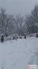 桐城最新雪景图,很冷!