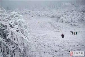 重庆仙女山终迎降雪,高清雪景美图养眼!