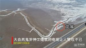 渤海湾沿岸大面积结冰,海滩现冰龙奇观