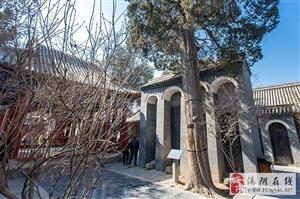 新濠天地赌博网址岳飞庙一棵560年的侧柏,大树无枝向北风