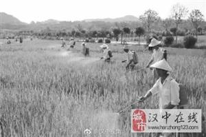 """洋县一合作社获""""全国十佳有机种植技术示范基地"""" 西北地区仅此一家"""