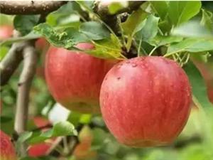 """它是�t生最""""恨""""的水果!每天吃���,年�p20�q!�S都人快吃起�恚�"""
