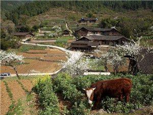 官宣!�S都�@座保留著200多年�v史古建筑的村落,成功入�x重�c�v史文化名