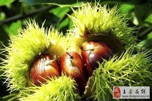 「提醒」10大坚果食用禁忌:为了健康,请花两分钟看完!