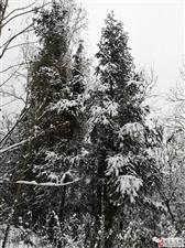 《红城雪意浓》