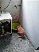 捡到橘猫一只