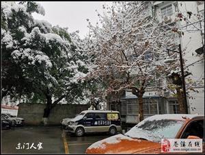 【苍溪】2018 年底那场大雪(手机版)【图】