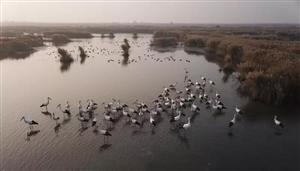 丰南:纪录片《高压线铁塔上的来客》