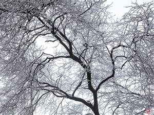 2018年仁寿中坝最美的一场雪~
