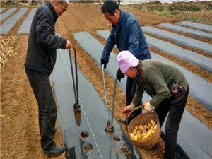 顿小明:把田间地头当舞台,奉献农技推广30多载