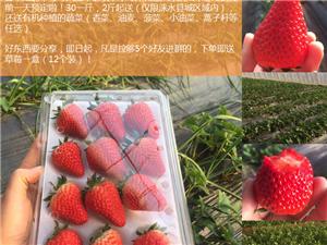 奶油草莓、�r家�t薯粉,原生�B,�手工,�o添加(�叽a注�苑咒N免�M吃)