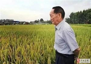 【致敬,袁老】华为宣布与袁隆平合作培育海水稻:全国发展1亿亩 多养