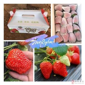 健康卫生好吃的奶油草莓