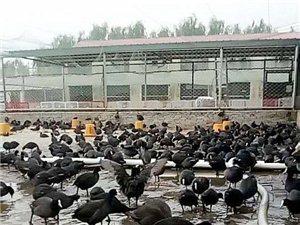 华容县子晨天龙生态养殖场