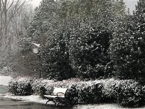 大雪过后,临泉......