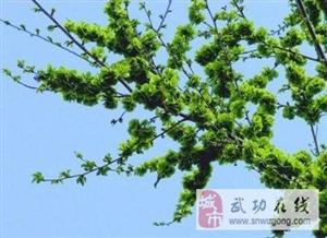 【绿野书院】榆树情――文/张惠英