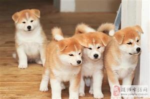 养狗的人越来越多,养狗有哪些好处呢?
