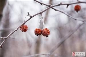 博华之冬,不一样的美.....