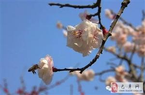 【巴彦网原创文学】诗词:恍然如梦外十二首-贾彦娟