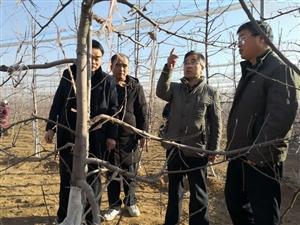 合阳县金峪镇迎接市对县果业生产观摩
