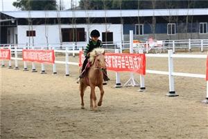 【过年了】广汉人又多一个玩耍的地方,易家河坝飞扬马会看马骑马去!