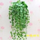 哪些植物适合放电脑桌旁,广汉市华亮园艺隆重推荐-常青藤