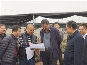 张磊:规范管理苗圃合作社带动贫困户创业脱贫