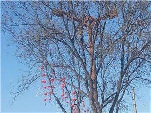 距离过年越来越近,市区街道红灯笼挂起来啦!