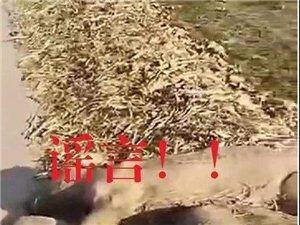 【官方通报】死猪视频最新调查处理情况!!传谣者已被依法处理!