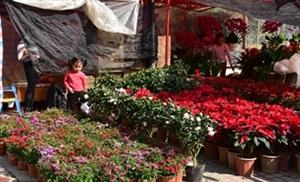 年味,河婆好日子广场的花市已经开始了