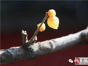 苏城巴彦摄影之腊