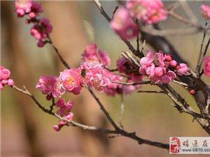 �D月里的春色