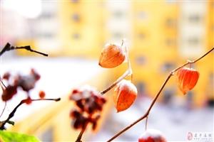 《春节喜迎飘瑞雪》