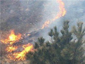 大年初3突发大火,村民救火队上山扑救