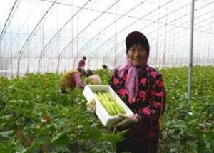 """扶贫草莓结出""""新花样"""",一起去莱阳这个村看看吧"""