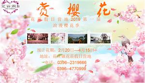 花庄假日营地 樱花即将开放 首届免费观赏