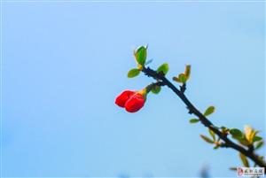 【绿野书院】春姑娘来了――梁敏霞