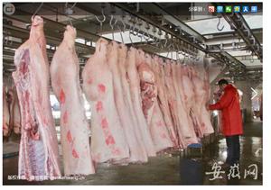 合肥一企业产品疑被检出非洲猪瘟病毒 回应:已暂停产