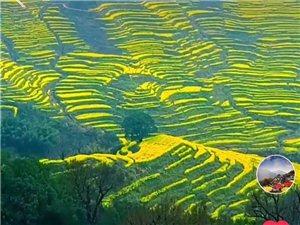 中国最美乡村——-婺源油菜花盛开了!首发特价仅298元3日游。火热报名