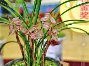 四川兰博会,2000余盆珍稀兰花亮相泸州