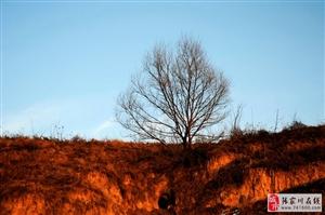 乡愁:春雪覆盖下的黄土塬渠子梁让我想念的泪流满面