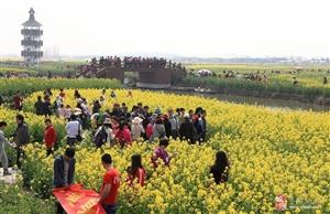 烟花三月下扬州,雷速户外3月30-31号带你千垛油菜花,水?#20185;?#26519;,泰州